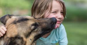 German Shepherd Kissing Young Child