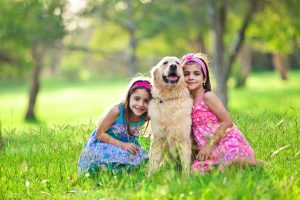Golden Retrievers are great family pets.