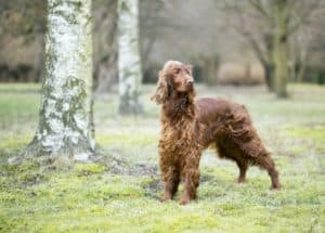 Beautiful dog standing in the park