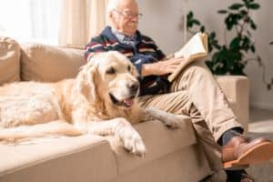 Happy Dog on Couch with Old Man