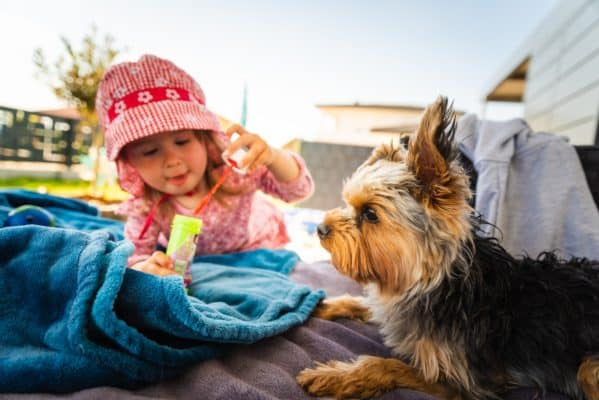 Portrait of a beautiful little 2 years old girl in red hat with yorkshire terrier dog on sofa in