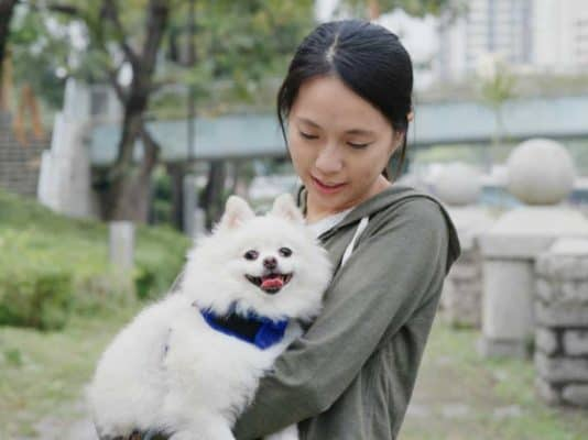 Woman play with Pomeranian dog at outdoor park