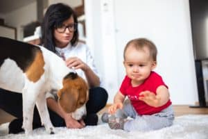 Baby with mother and Beagle dog on carpet on the floor.