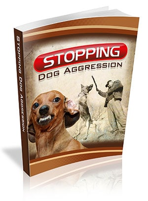 Stopping Dog Aggression